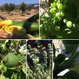 Egen odling