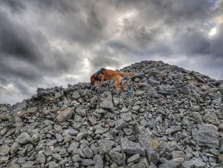 Explosivhund Miljö & Säkerhet Sverige AB