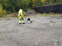 Anton & Pi- Explosivhund Miljö & Säkerhet Sverige AB