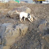 Explosivhund söker Dola i gammal sprängbotten - Explosivhund Miljö & Säkerhet Sverige AB