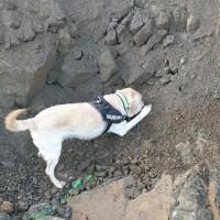 Explosivhund markerar Dola i gammal sprängbotten - Explosivhund Miljö & Säkerhet Sverige AB