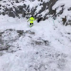 Explosivhunda söker dolor- Explosivhund Miljö & Säkerhet Sverige AB