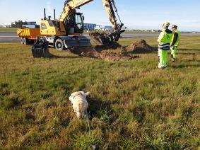 Explosivhundar på Arlanda Flygplats- Explosivhund Miljö & Säkerhet Sverige AB