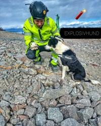 Anton, Pi - Explosivhund Miljö & Säkerhet Sverige AB
