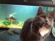Alice, och nej fiskarna bor inte kvar hos oss
