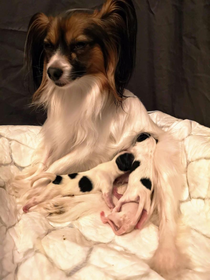 Luna med sina nyfödda, stolt moder.