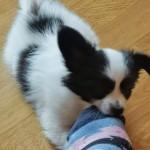 Happy socks give happy dogs