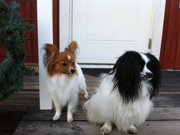 Ize bekantar sig med sin nya kompis, fluffbollen Zorro