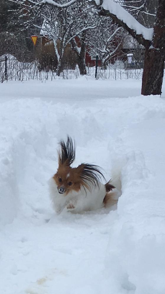 Iza och snö är en bra kombination ...