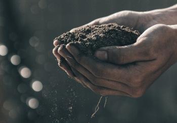 Gödsel och växtnäring