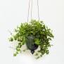 Löv - handdrejad ampel grön - H 14 cm Diam 11 cm