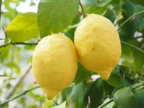 Citron eterisk olja EKO