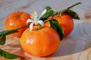 Mandarin eterisk olja EKO
