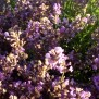 Lavendel 100 gram