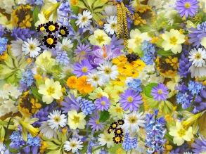 Blomstra, unik oljeblandning 10 ml
