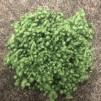 Ull Nepps - Små ulltussar - Grön 10 gram