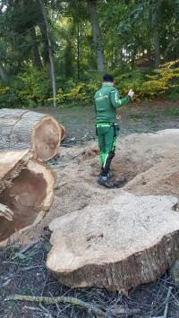 Trädfällning Uppsala