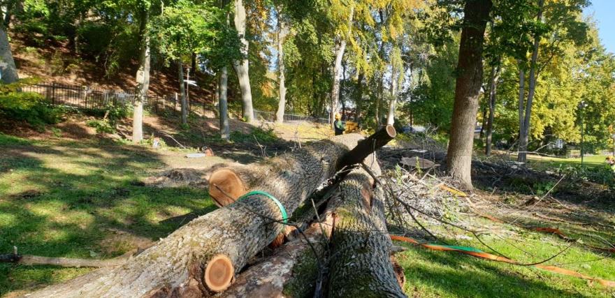 Trädfällning Stockholm