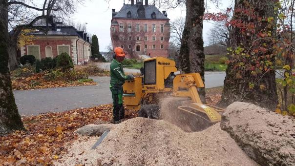 Stubbfräsning Uppsala