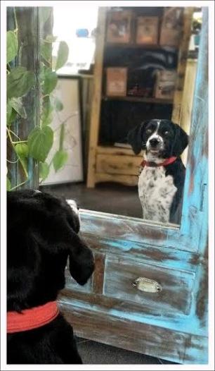 Spegel...säg vem vackrast i staden är.