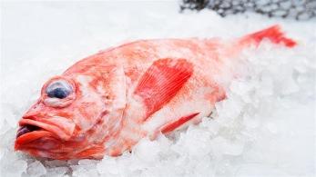 Kungsfisk (5kg) -