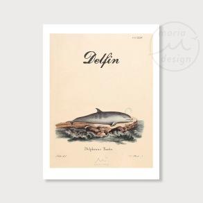 Antik illustration - Delfin - Antik illustration - Delfin, A5