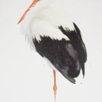 Karl Mårtens Stork 32x59 Litografi