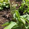 Växtstickor - Salvia