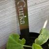 Växtstickor - Gurka
