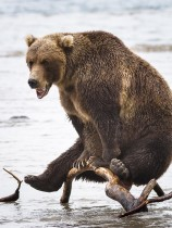 07. Yogi Bear (Kamtjatka)