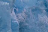 2R. Tretåig mås  och blå is (Svalbard)