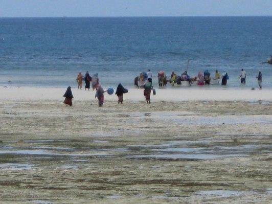 Tidvatten och by-borna plockar krabbor