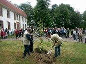 Ett träd till minne av 100 år med bolaget