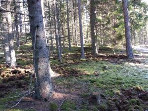 Klicka på bilden för att komma till Skogen ....