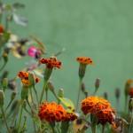 flower-3188121_1920