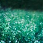 flowers-meadow-5787