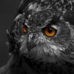 animal-avian-beak-416202