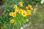 Lysande blomster