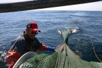 Räkfiske 2011