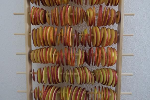 Äppelringar som hänger på tork på Apelstapeln äppeltork
