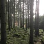 skogsbad2