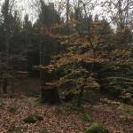 skogsbad3