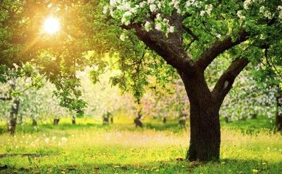 Anlita City Trädvård för hjälp med trädbeskärning i Stockholm