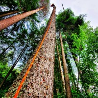 Professionella arborister