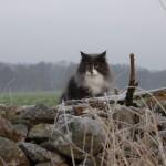 Kattens Dag 2011 027