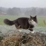 Kattens Dag 2011 028