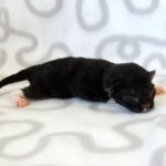 Nyfödda 2 dagar  (19)