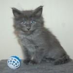 Barnaby (3)