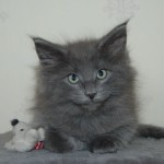 Barnaby (4)
