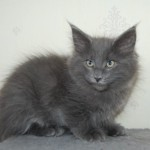 Barnaby (5)